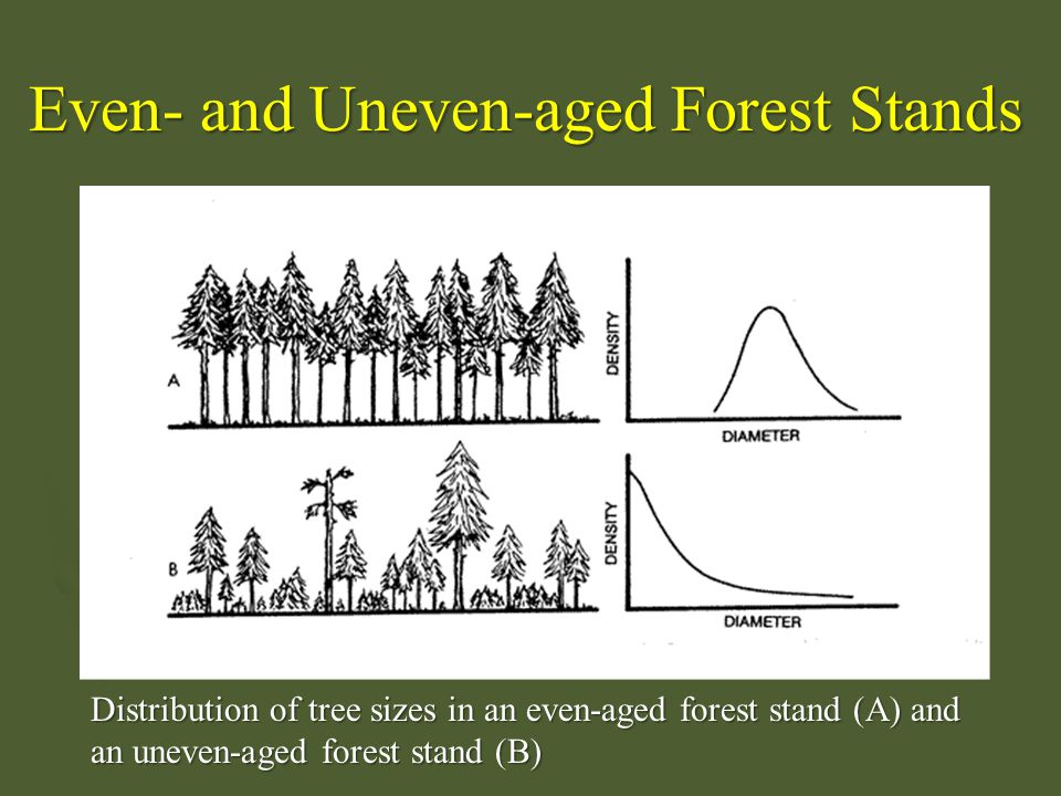 Distribution of tree sizes in an even-aged forest stand (A) and an uneven-aged forest stand (B) Even- and Uneven-aged Forest Stands
