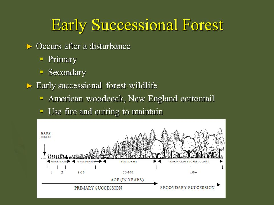 Early Successional Forest ► Occurs after a disturbance  Primary  Secondary ► Early successional forest wildlife  American woodcock, New England cot