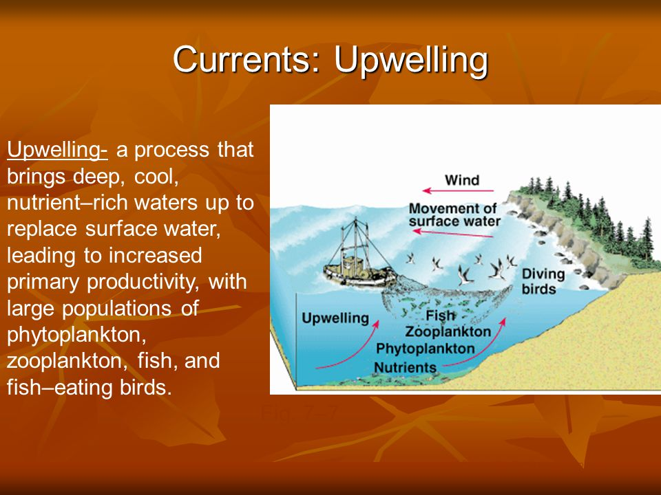 Currents: Upwelling © Brooks/Cole Publishing Company / ITP Upwelling- a process that brings deep, cool, nutrient–rich waters up to replace surface wat