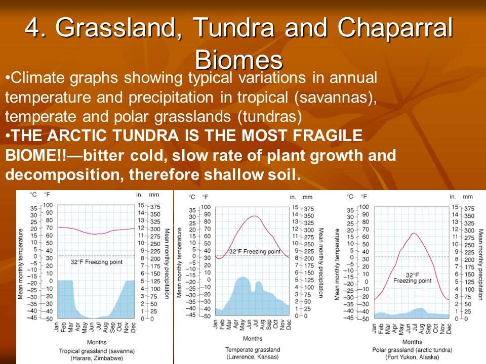 4. Grassland, Tundra and Chaparral Biomes © Brooks/Cole Publishing Company / ITP Fig.