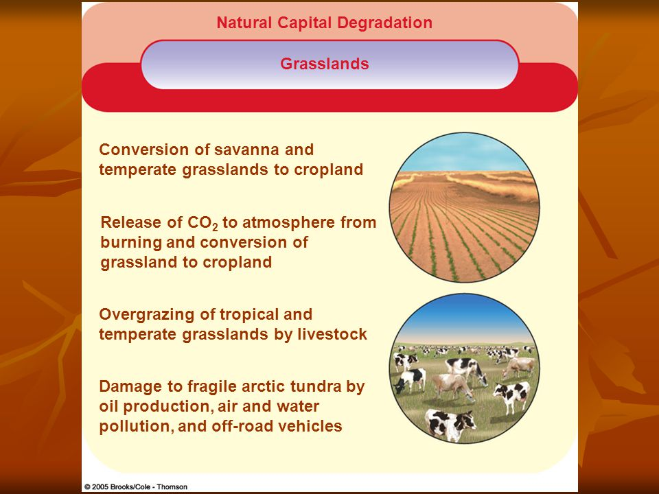 Natural Capital Degradation Grasslands Conversion of savanna and temperate grasslands to cropland Release of CO 2 to atmosphere from burning and conversion of grassland to cropland Overgrazing of tropical and temperate grasslands by livestock Damage to fragile arctic tundra by oil production, air and water pollution, and off-road vehicles