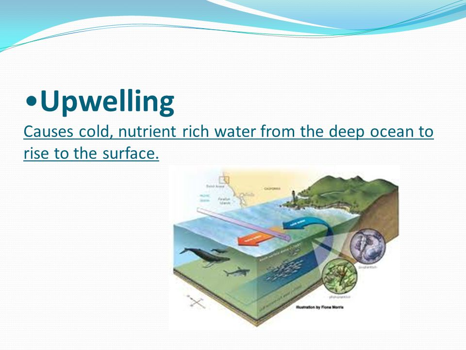 Upwelling Causes cold, nutrient rich water from the deep ocean to rise to the surface.