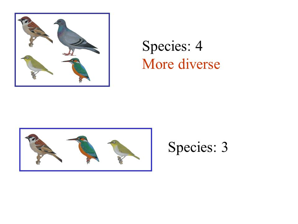 Species: 4 More diverse Species: 3