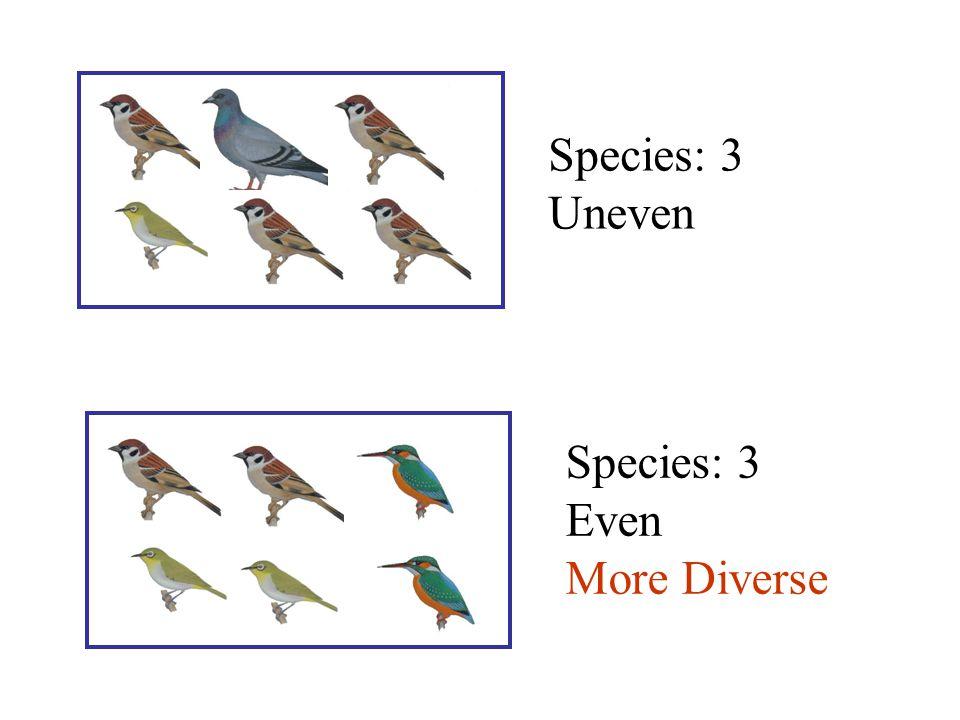 Uneven Species: 3 Even More Diverse