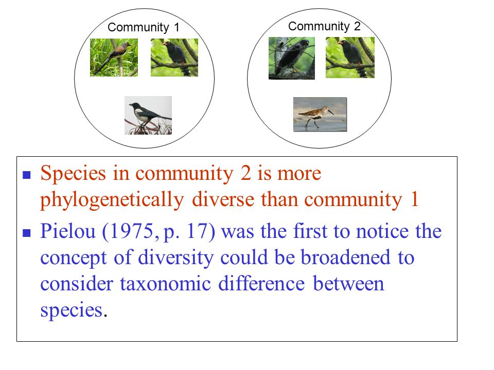 Species in community 2 is more phylogenetically diverse than community 1 Pielou (1975, p.