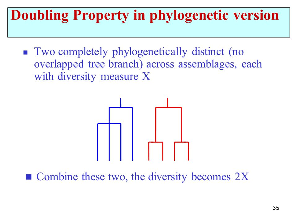 35 Doubling Property in phylogenetic version Two completely phylogenetically distinct (no overlapped tree branch) across assemblages, each with diversity measure X Combine these two, the diversity becomes 2X