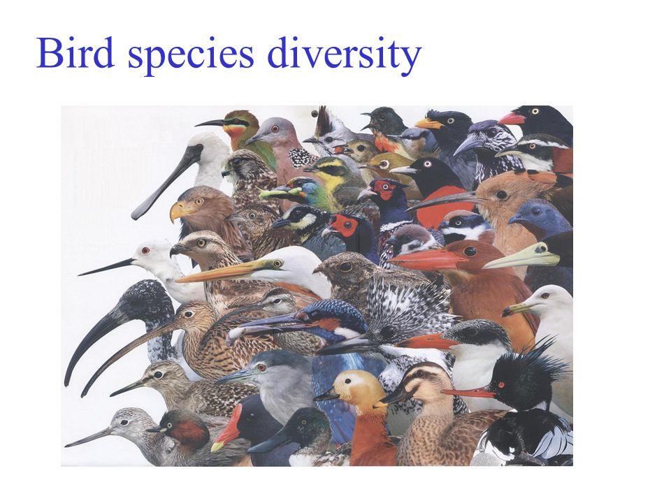 Bird species diversity