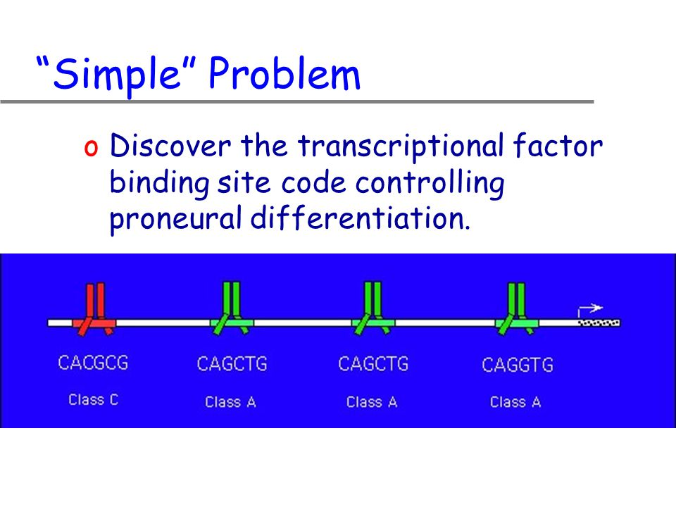 Simple Problem oDiscover the transcriptional factor binding site code controlling proneural differentiation.