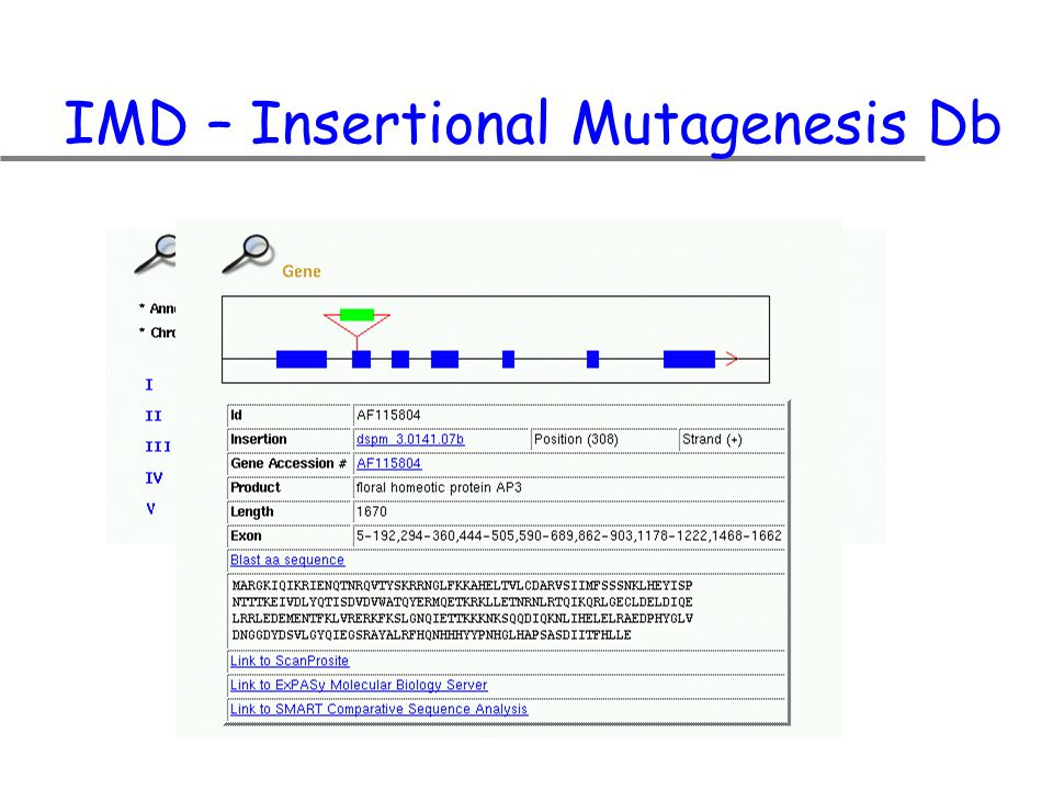 IMD – Insertional Mutagenesis Db
