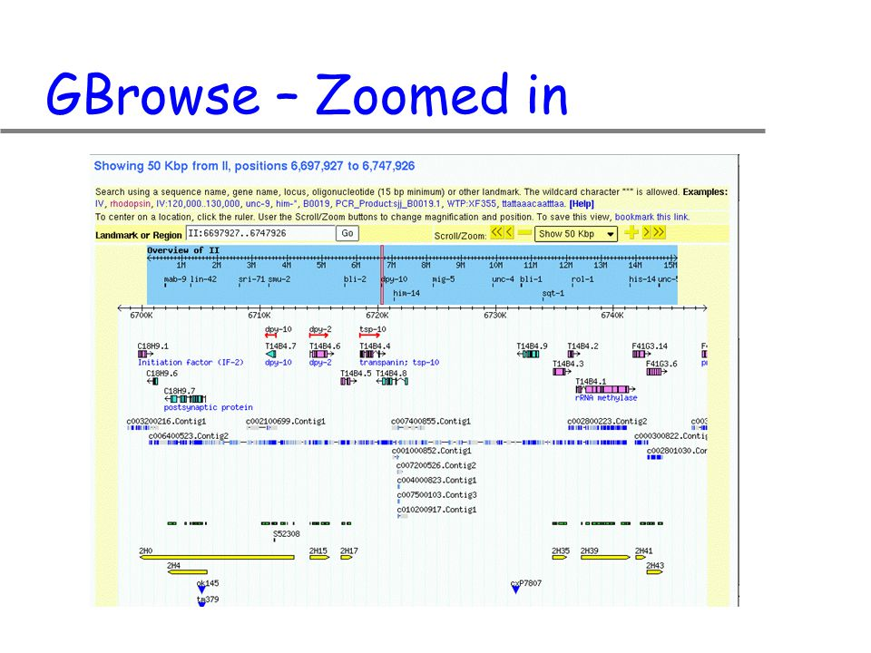 GBrowse – Zoomed in