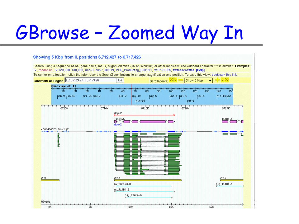 GBrowse – Zoomed Way In