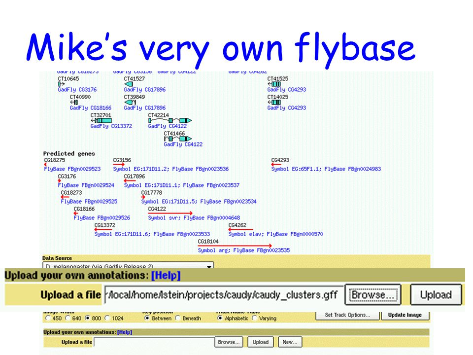 Mike's very own flybase