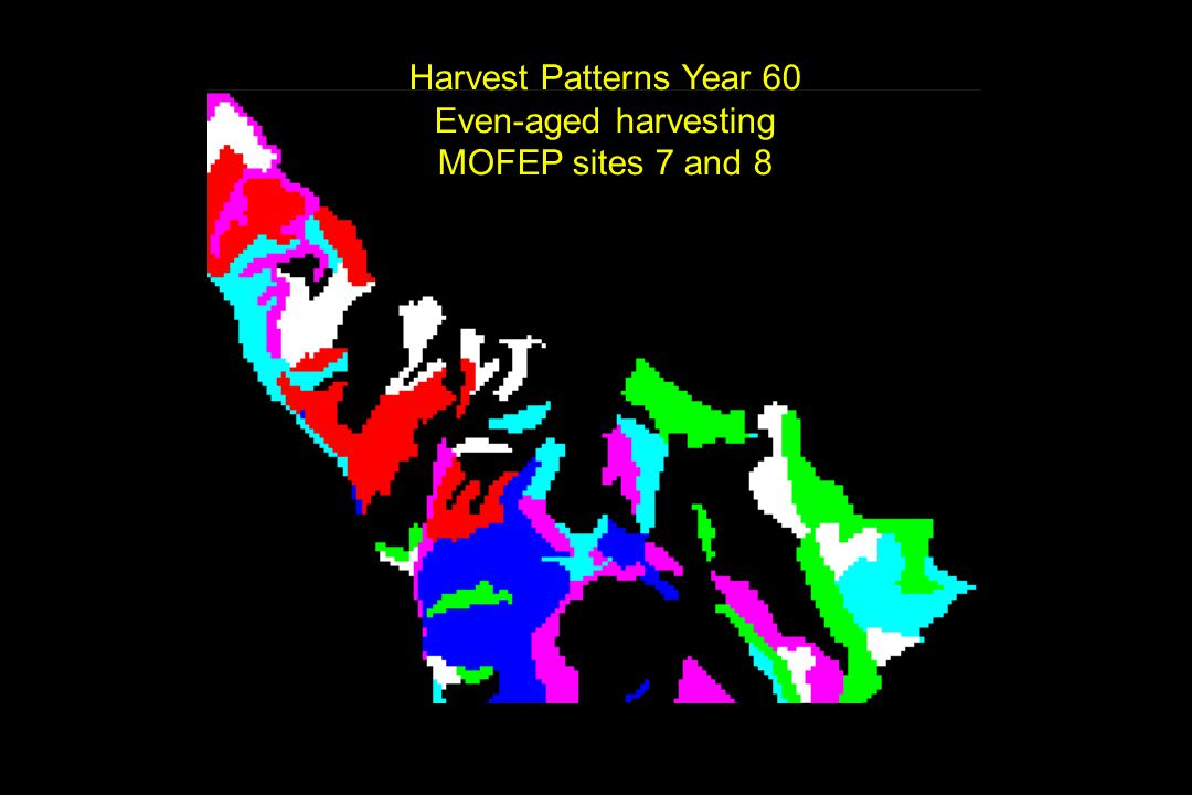 Harvest Patterns Year 60 Even-aged harvesting MOFEP sites 7 and 8