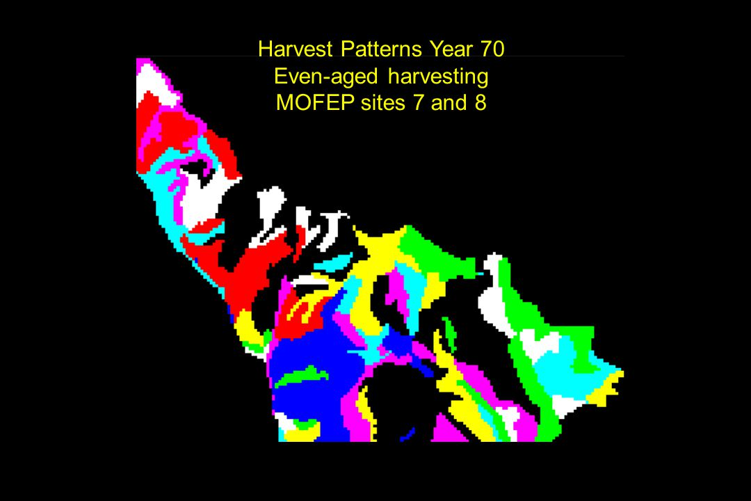 Harvest Patterns Year 70 Even-aged harvesting MOFEP sites 7 and 8