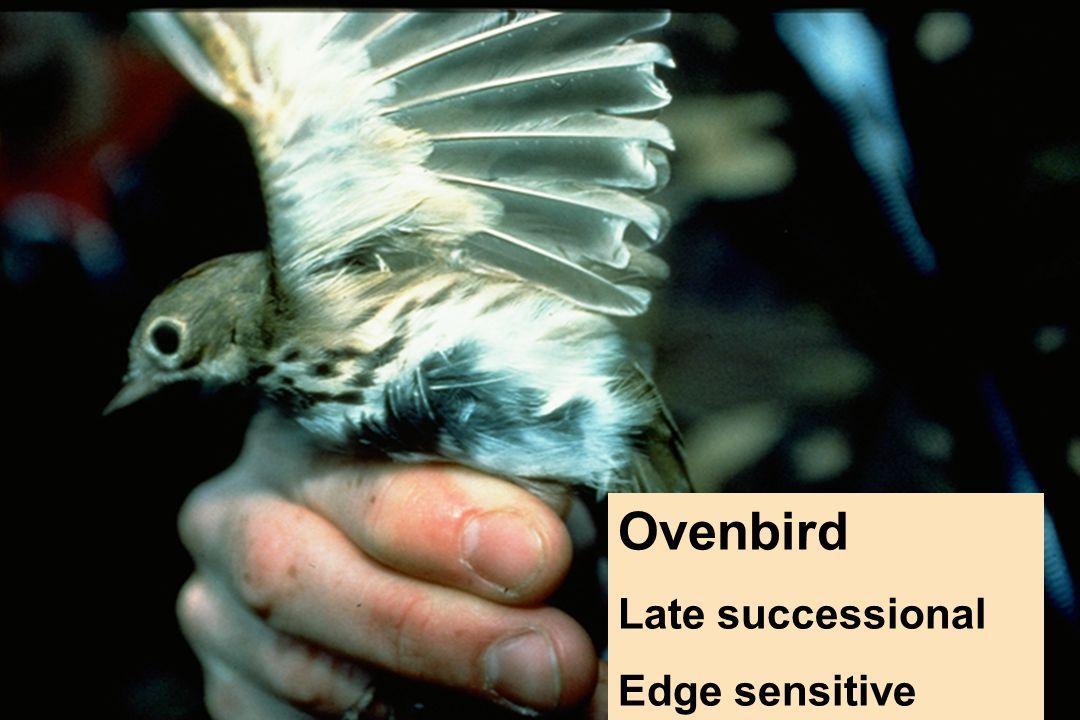 Ovenbird Late successional Edge sensitive