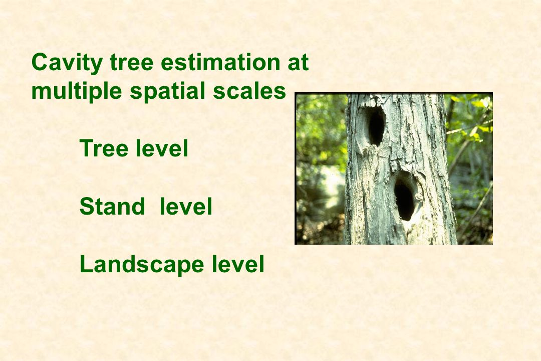 Cavity tree estimation at multiple spatial scales Tree level Stand level Landscape level
