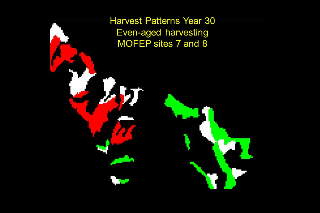 Harvest Patterns Year 30 Even-aged harvesting MOFEP sites 7 and 8