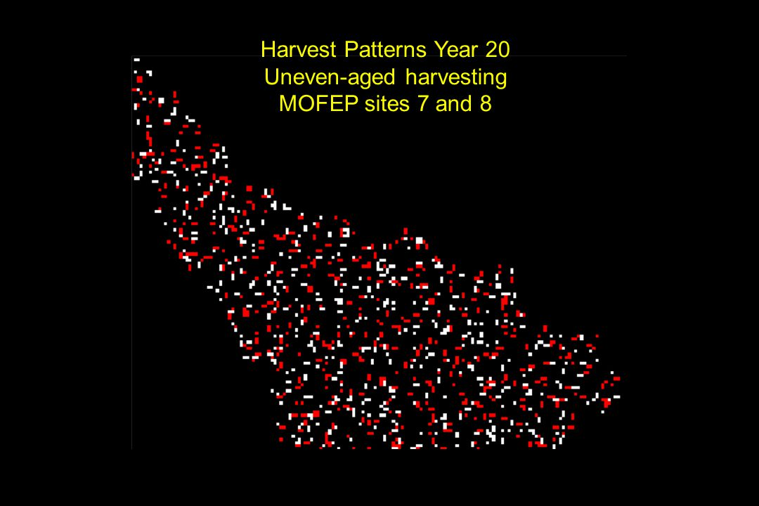 Harvest Patterns Year 20 Uneven-aged harvesting MOFEP sites 7 and 8