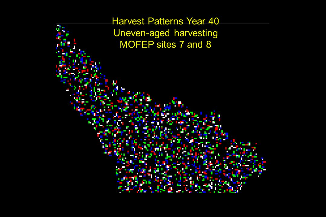 Harvest Patterns Year 40 Uneven-aged harvesting MOFEP sites 7 and 8