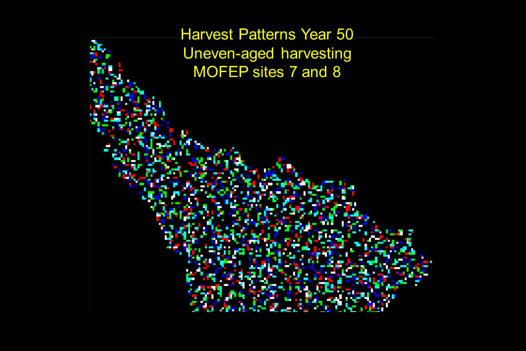 Harvest Patterns Year 50 Uneven-aged harvesting MOFEP sites 7 and 8