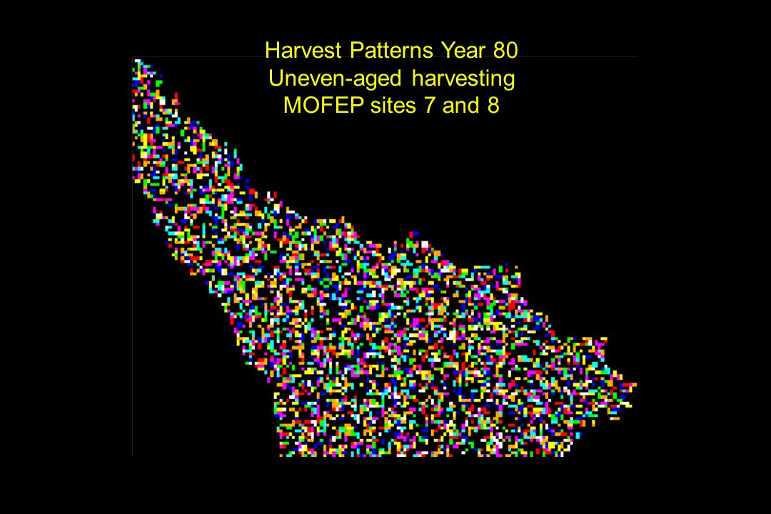 Harvest Patterns Year 80 Uneven-aged harvesting MOFEP sites 7 and 8