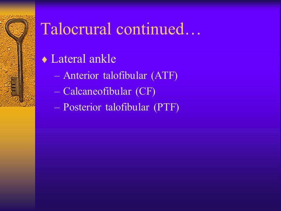 Talocrural continued…  Lateral ankle –Anterior talofibular (ATF) –Calcaneofibular (CF) –Posterior talofibular (PTF)