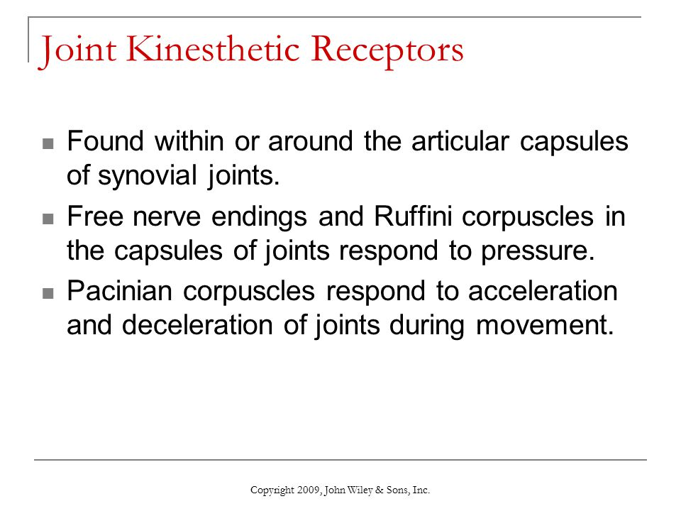 Joint Kinesthetic Receptors Found within or around the articular capsules of synovial joints. Free nerve endings and Ruffini corpuscles in the capsule