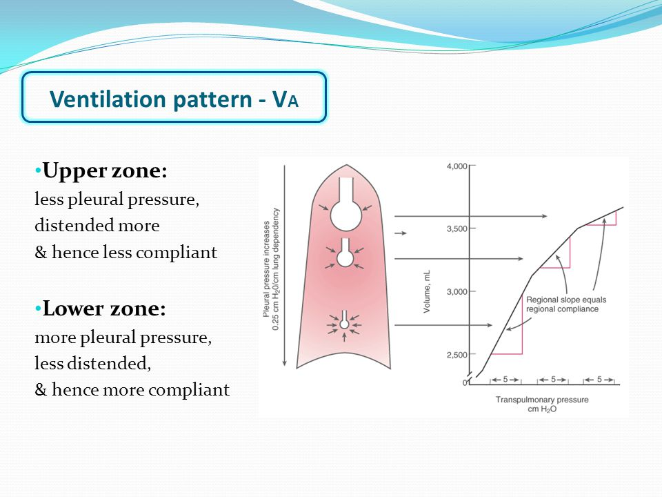 Upper zone: less pleural pressure, distended more & hence less compliant Lower zone: more pleural pressure, less distended, & hence more compliant Ventilation pattern - V A