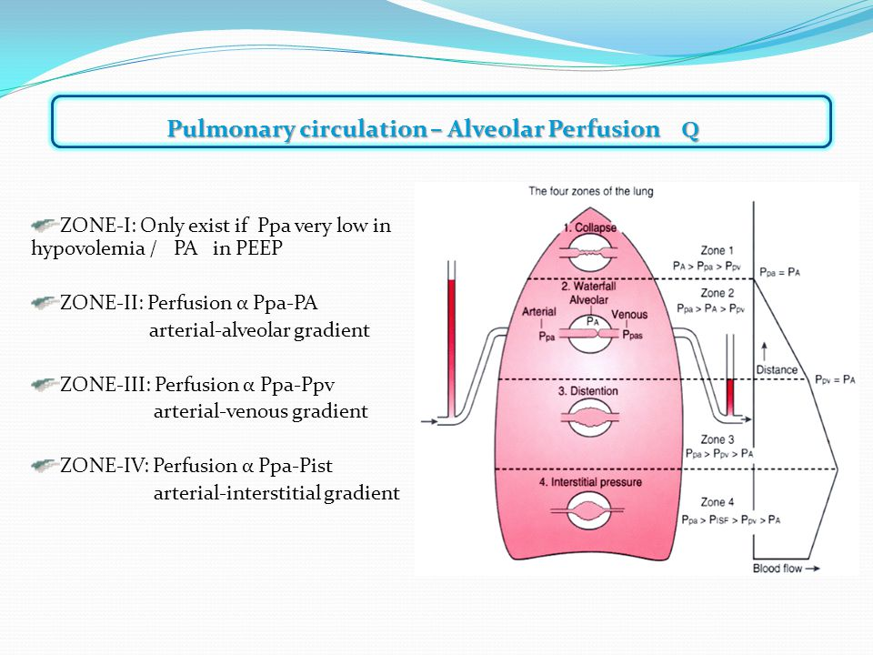 ZONE-I: Only exist if Ppa very low in hypovolemia / PA in PEEP ZONE-II: Perfusion α Ppa-PA arterial-alveolar gradient ZONE-III: Perfusion α Ppa-Ppv arterial-venous gradient ZONE-IV: Perfusion α Ppa-Pist arterial-interstitial gradient Pulmonary circulation – Alveolar Perfusion Q