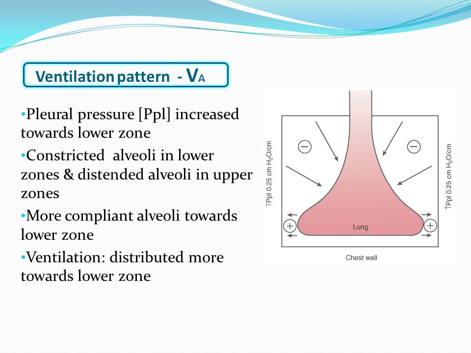 Ventilation pattern - V A Pleural pressure [Ppl] increased towards lower zone Constricted alveoli in lower zones & distended alveoli in upper zones More compliant alveoli towards lower zone Ventilation: distributed more towards lower zone