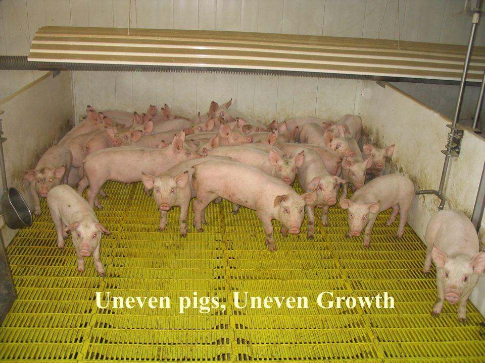 Uneven pigs, Uneven Growth
