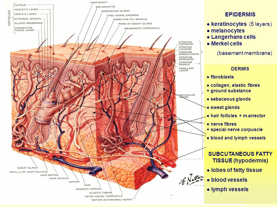 Description of Skin Lesions Primarysecondaryeflorescence) Primary and secondary lesions (eflorescence) single or multiple grouped (multiple lesions grouped in one area) disseminated (exanthema – widespread discrete lesions) arranged (in line, in ring, snake-like…)