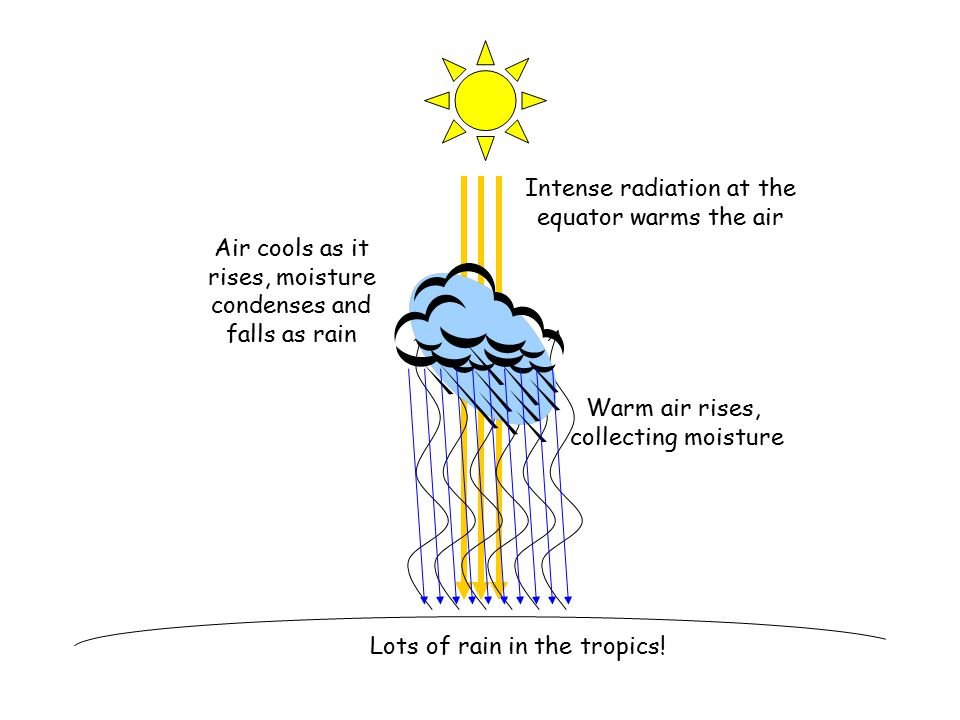 Intense radiation at the equator warms the air Warm air rises, collecting moisture Air cools as it rises, moisture condenses and falls as rain Lots of rain in the tropics!