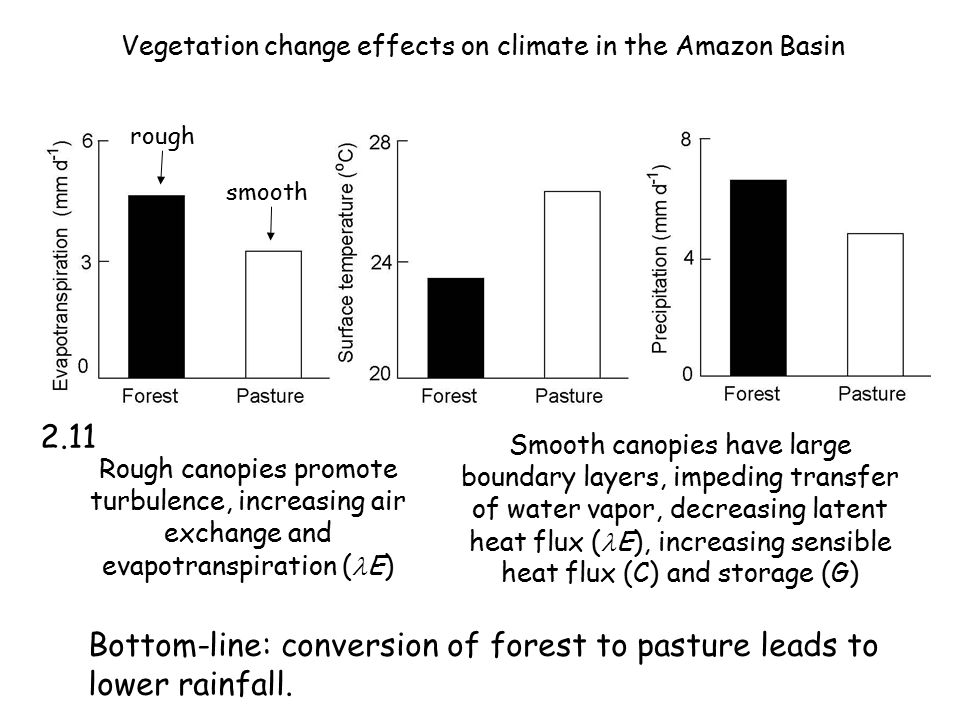 Vegetation change effects on climate in the Amazon Basin Rough canopies promote turbulence, increasing air exchange and evapotranspiration ( E) Smooth canopies have large boundary layers, impeding transfer of water vapor, decreasing latent heat flux ( E), increasing sensible heat flux (C) and storage (G) rough smooth Bottom-line: conversion of forest to pasture leads to lower rainfall.