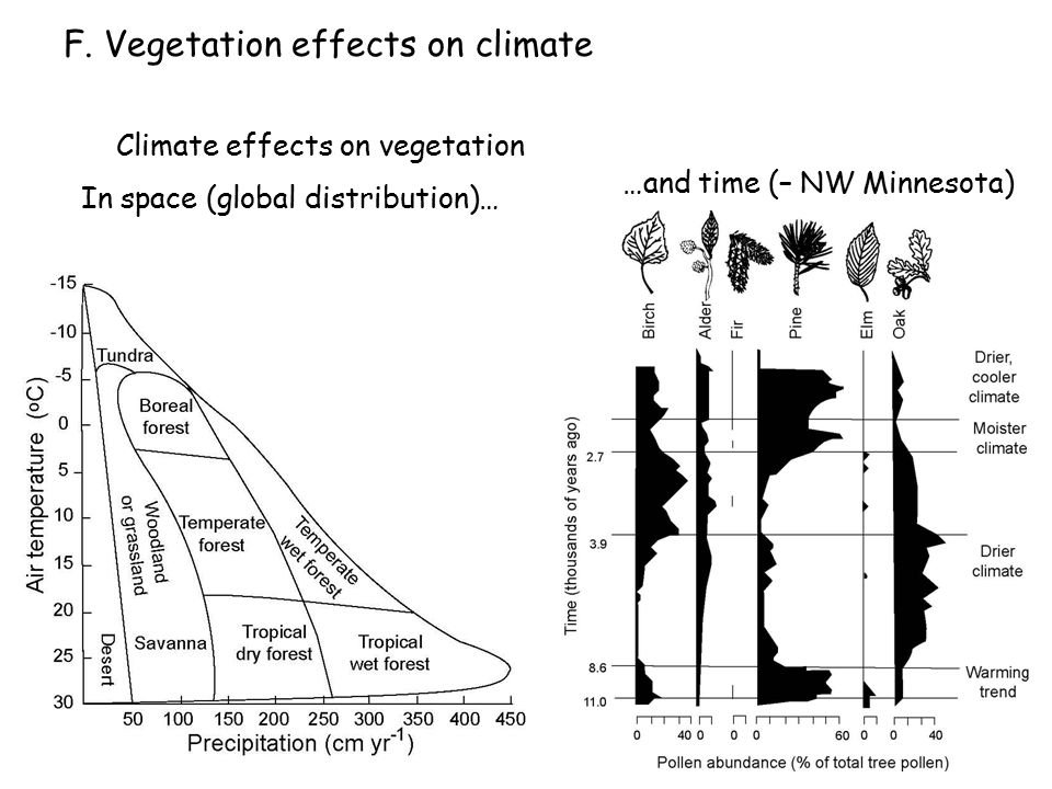 F. Vegetation effects on climate …and time (– NW Minnesota) Climate effects on vegetation In space (global distribution)…