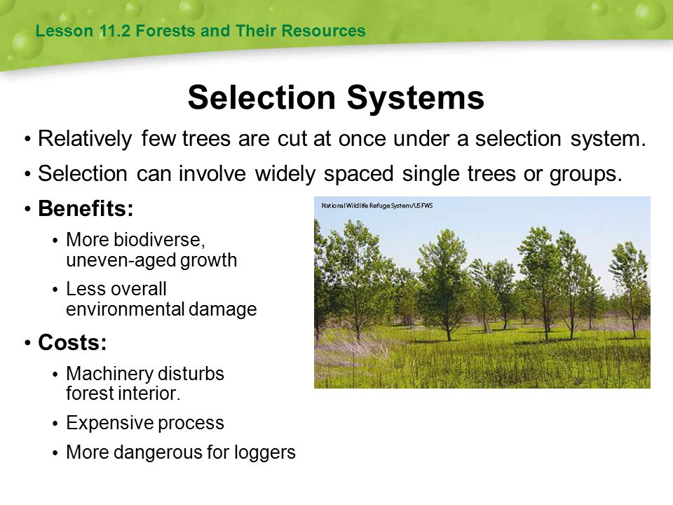 Selection Systems Relatively few trees are cut at once under a selection system. Selection can involve widely spaced single trees or groups. Benefits: