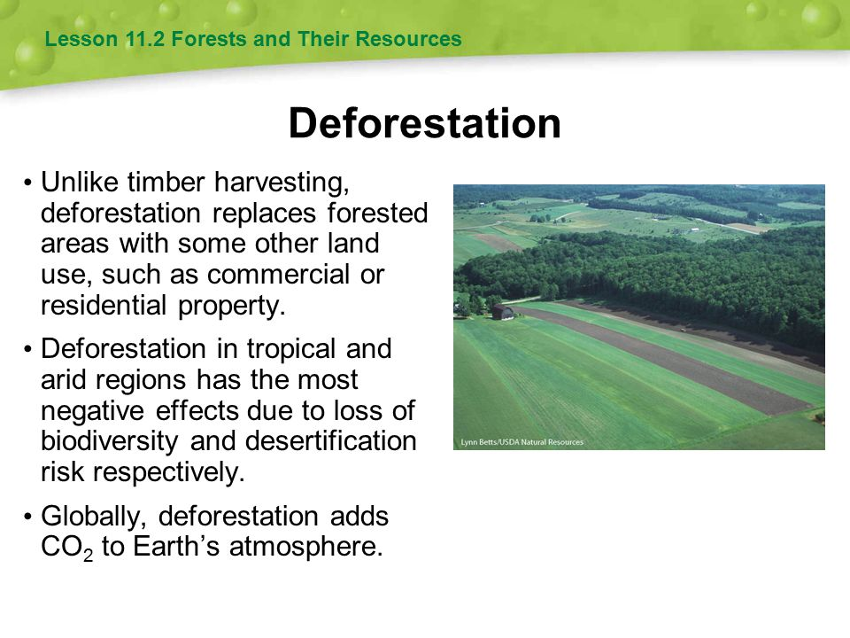 Deforestation Unlike timber harvesting, deforestation replaces forested areas with some other land use, such as commercial or residential property. De