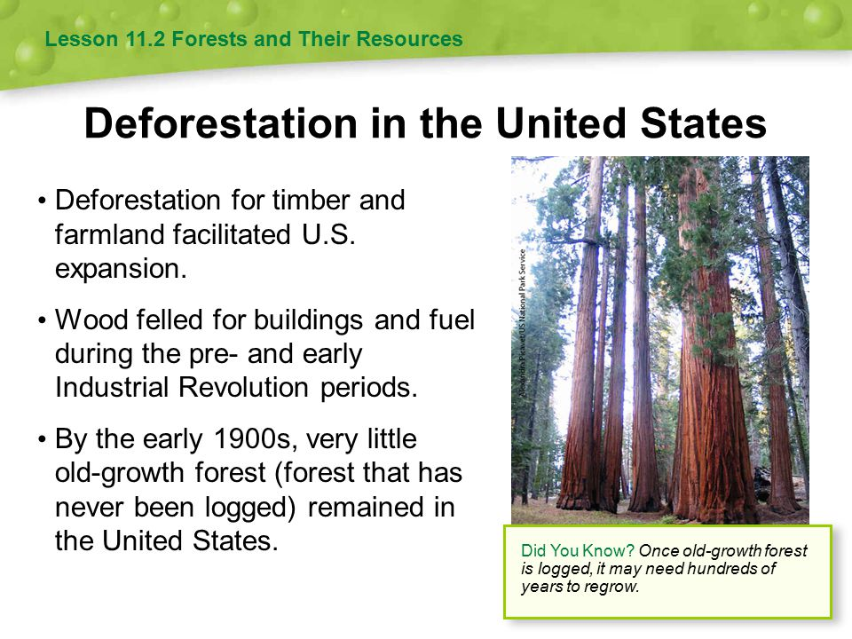 Deforestation in the United States Deforestation for timber and farmland facilitated U.S. expansion. Wood felled for buildings and fuel during the pre