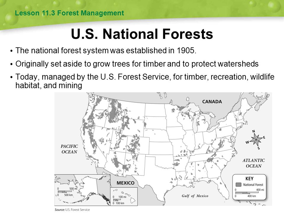 U.S. National Forests The national forest system was established in 1905. Originally set aside to grow trees for timber and to protect watersheds Toda