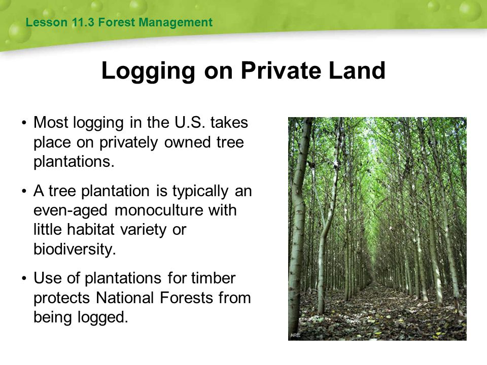 Logging on Private Land Most logging in the U.S. takes place on privately owned tree plantations. A tree plantation is typically an even-aged monocult