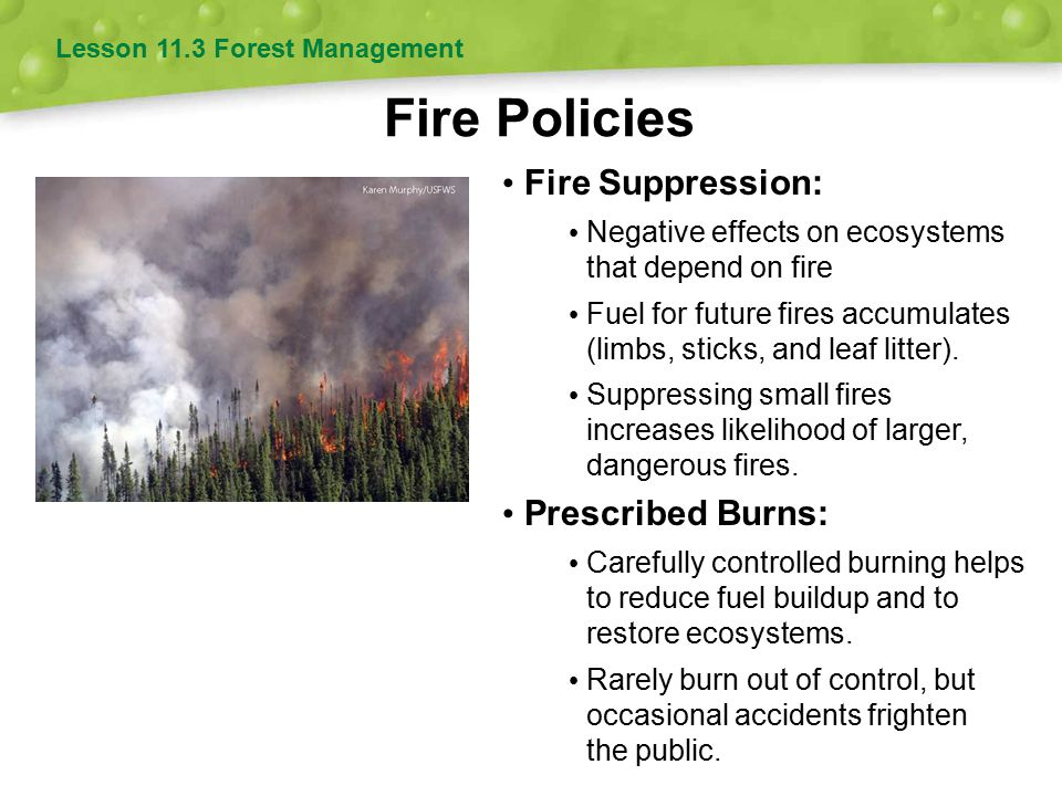 Fire Policies Lesson 11.3 Forest Management Fire Suppression: Negative effects on ecosystems that depend on fire Fuel for future fires accumulates (li