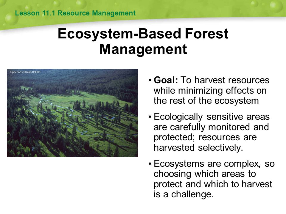 Lesson 11.3 Forest Management Most logging in the U.S.