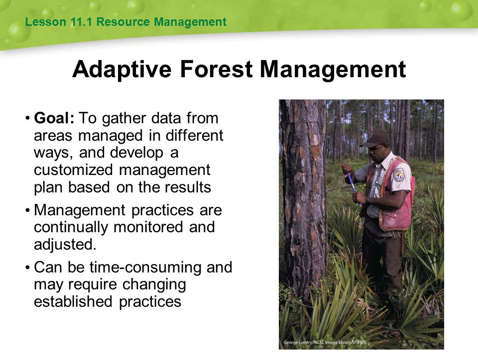 Adaptive Forest Management Goal: To gather data from areas managed in different ways, and develop a customized management plan based on the results Ma