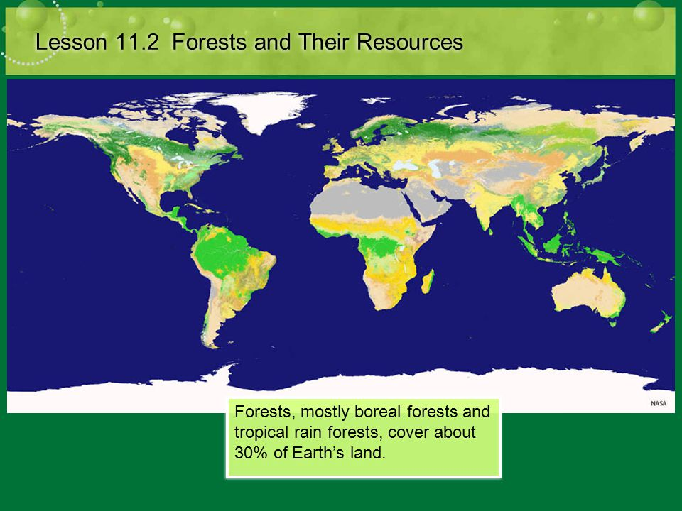 Value of Forests Lesson 11.2 Forests and Their Resources Ecological value: Provide habitat for organisms Source of biodiversity Prevent erosion Purify water Store carbon, release oxygen Economic value: Timber for lumber and fuel Source of food Raw material for many medicines