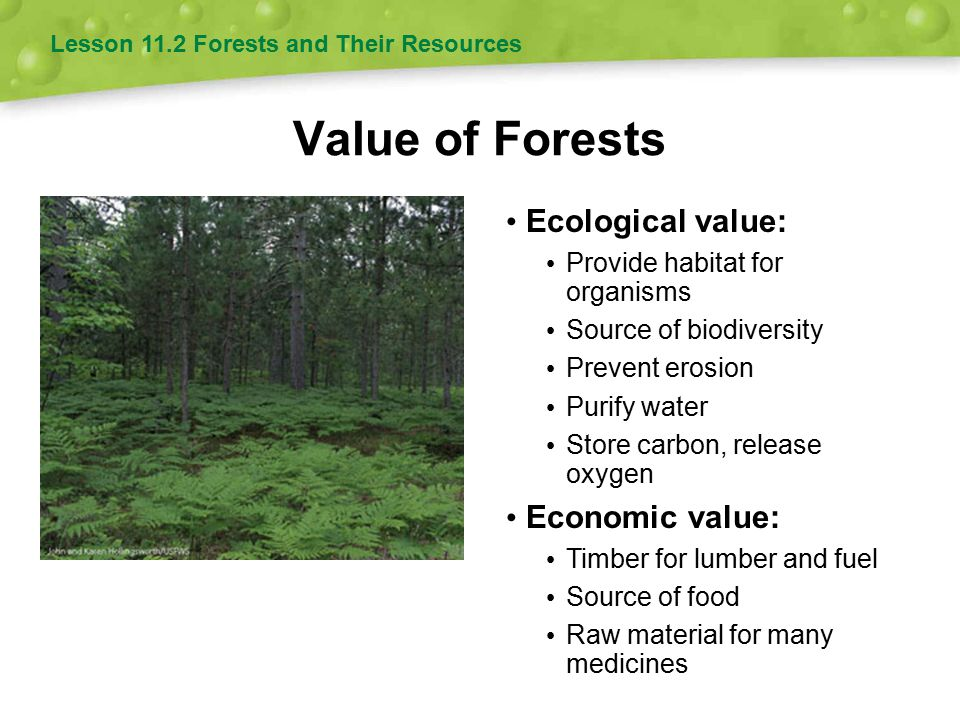 Timber Harvesting Methods Three methods: Clear-cutting, seed-tree or shelterwood approach, and selection system May result in even-aged or uneven-aged regrowth Even-aged regrowth tends to be less biodiverse than uneven-aged regrowth.