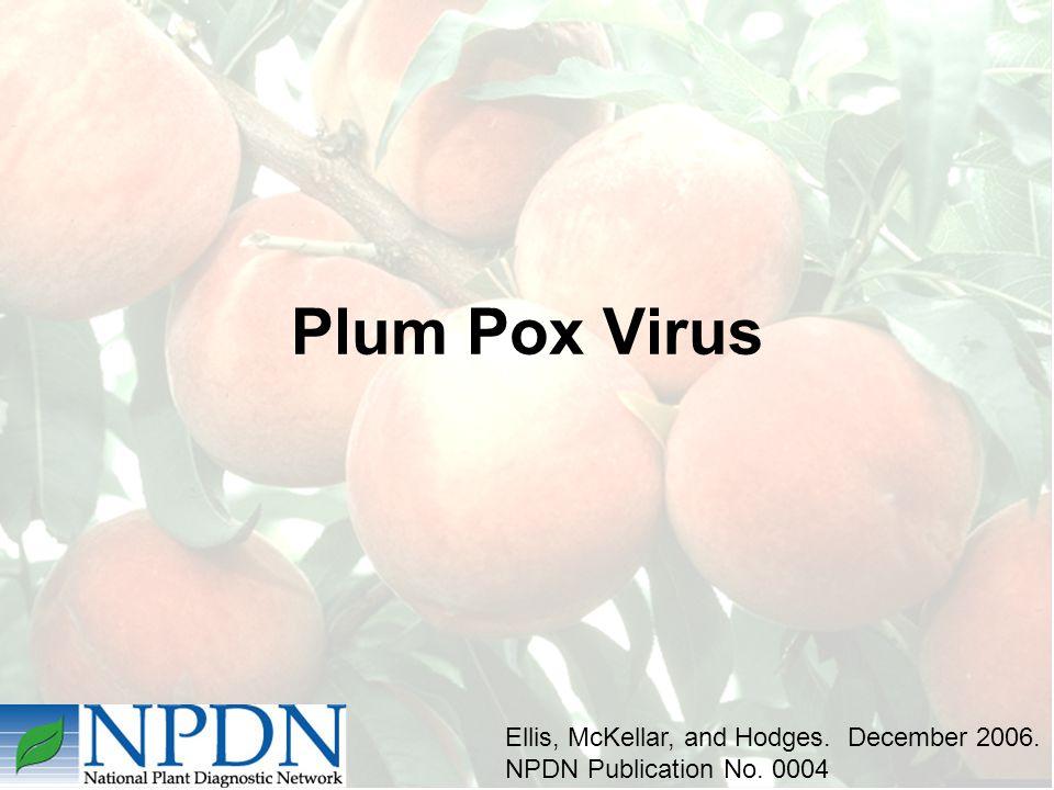 Plum Pox Virus Ellis, McKellar, and Hodges. December 2006. NPDN Publication No. 0004