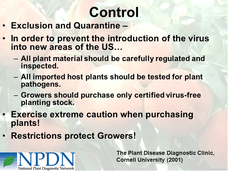Control Exclusion and Quarantine – In order to prevent the introduction of the virus into new areas of the US… –All plant material should be carefully regulated and inspected.