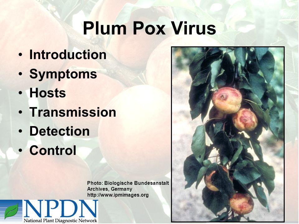 Plum Pox Virus Introduction Symptoms Hosts Transmission Detection Control Photo: Biologische Bundesanstalt Archives, Germany http://www.ipmimages.org