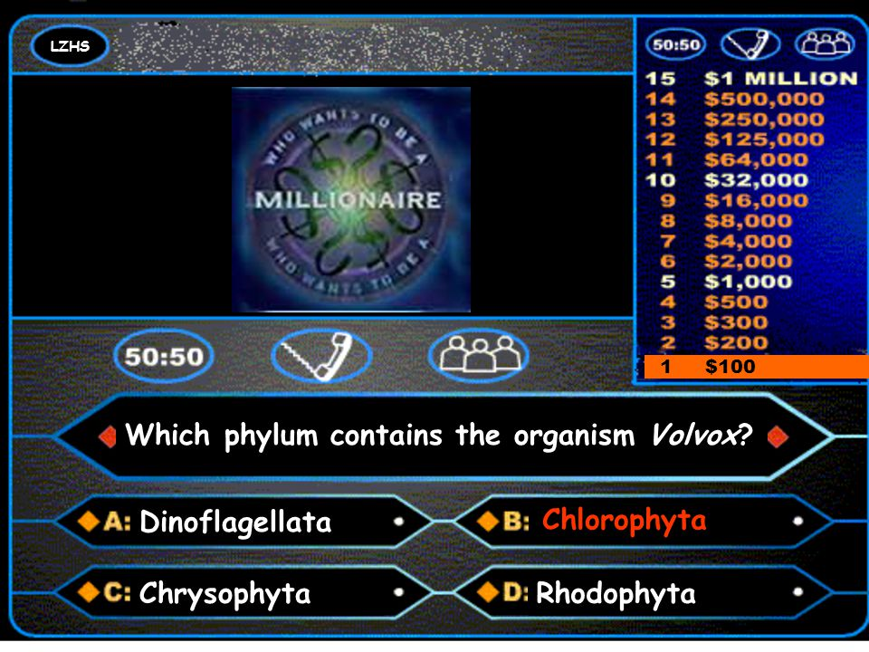LZHS A number and a colon 1 $100 Which phylum contains the organism Volvox? Dinoflagellata Chlorophyta RhodophytaChrysophyta