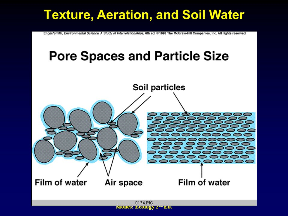 Molles: Ecology 2 nd Ed. Texture, Aeration, and Soil Water